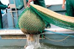 Sacco di vongole pescato