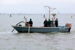 Pesca delle vongole